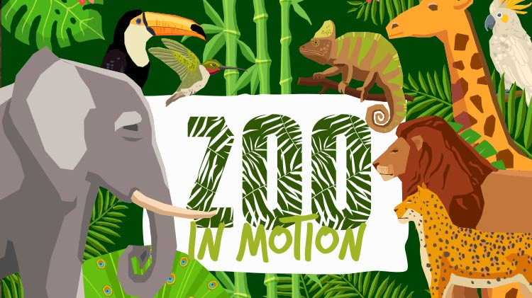 Zoo in Motion
